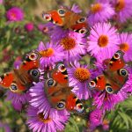 Schmetterlinge-online-Gruppe-Wandel-Maria Liebig